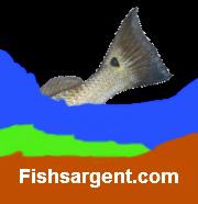 Fishsargent
