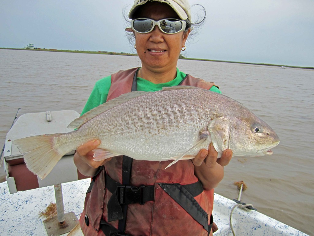Giant croaker invades sargent texas for What is a croaker fish