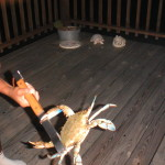 Crabs caught by our Sargent, Texas buisness
